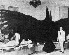 Argentavis magnificens, about the size of a Firebird on Earth One, 21 foot wing spread, up to 150 mph