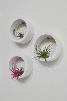 Air plants on wall! Air plants on wall! Aloe Vera, Rooftop Patio, Plant Wall, Air Plants, Green Leaves, Plant Hanger, Orchids, Greenery, Concrete
