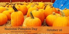 NATIONAL PUMPKIN DAY  – October 26, 2016 | We recognize a favored autumn decoration and food on October 26th that is used in a variety of recipes, competitions and festivals. It's National Pumpkin Day! | Including 4 Delicious Pumpkin Recipes!