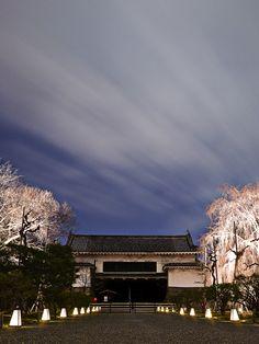 Nijo-Castle-Sakura-KYOTO,JAPAN