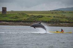 Irish Adventures sea kayaking