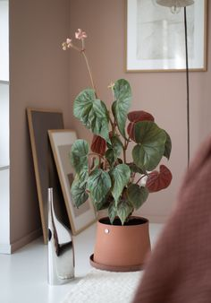 my scandinavian home: At Home With The Terra Collection From Georg Jensen Swedish Bedroom, Plant Games, Architectural Plants, Terracotta Plant Pots, Small Mirrors, Scandinavian Home, Outdoor Plants, Garden Styles, Houseplants