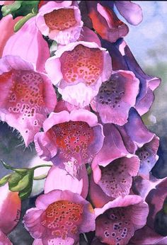 Foxglove - art by Marney Ward Art Floral, Watercolor Flowers, Watercolor Paintings, Watercolors, Flower Paintings, Botanical Art, Botanical Illustration, Silk Painting, Love Art
