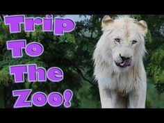 Animals at the zoo video