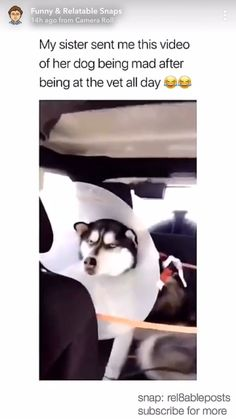 """He's like , """"fuck you Karen,your dead to me. Funny Animal Jokes, Funny Dog Memes, Funny Dog Videos, Funny Video Memes, Crazy Funny Memes, Really Funny Memes, Funny Animal Pictures, Funny Relatable Memes, Cute Funny Dogs"""