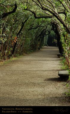 {La Cerchiata~ Boboli Garden~ Florence} - tunnel running parallel with the Viottolone. It was enclosed on either side by a phalanx of pruned holm oaks, which had been carefully trained since the 1600s to arch inward over the path, intertwining overhead and providing an awning of foliage.