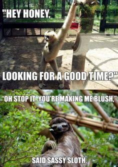 Sexy sloth