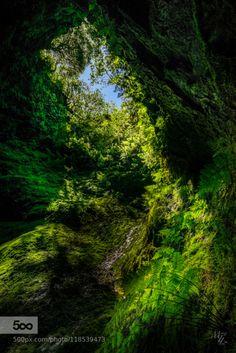 Algar do Carvão II by miketlim  terceira Algar do Carvão Angra do Heroismo azores açores europe portugal green lava lava tube natura