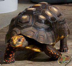 Turtle Week 2014 Day 3