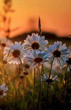 Sunrise Pictures, Nature Pictures, Beautiful Pictures, Nature Photography Flowers, Flowers Nature, Flower Background Wallpaper, Flower Backgrounds, Beautiful Flowers Wallpapers, Pretty Wallpapers