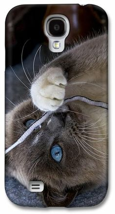 Galaxy S4 Phone case by Rick Grisolano Photography LLC