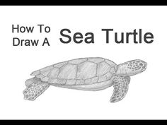 how to draw a sea turtle - Google Search