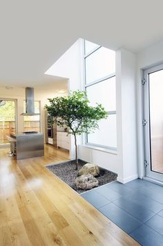 There is something magical about a tree growing inside the house. Love it.