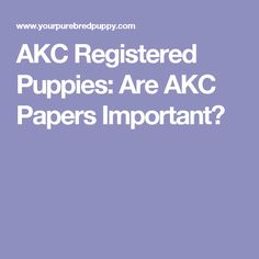 AKC Registered Puppies: Are AKC Papers Important?