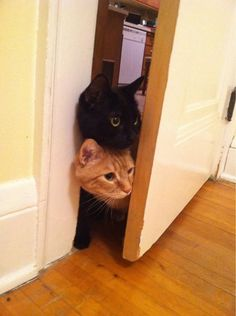 """For some reason I look at this and think """"Sherlock and John as cats...."""""""