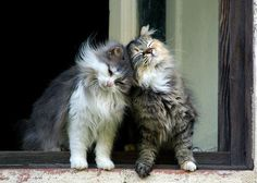 Nuzzling Kittens