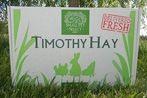Timothy Hay for Small Animals | Small Pet Select
