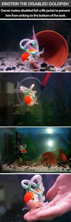 Einstein the goldfish…