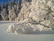 pura neve