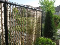 Cheapo way to spruce up a chain link fence!