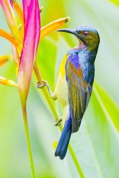 Aves exóticas.