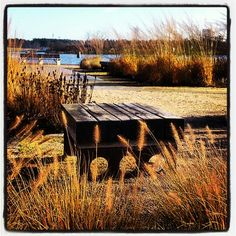 De fyra årstidernas park Sölvesborg - Design Piet Oudolf.