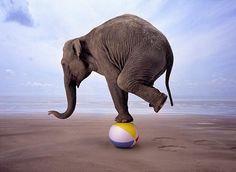 Цирковой слон фото