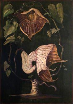 Marianne North (English, 1830-1890) A Climbing Plant of Old Calabar, circa 1880