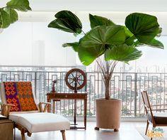 Com um tronco único, o destaque da palmeira-leque é sua folhagem, bastante chamativa. O ambiente escolhido para a planta deve receber luz indireta e a umidade da terra deve ser constante, por isso recomenda-se a irrigação três/quatro vezes por semana, além de borrifar água nas folhas.