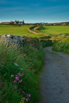 Countryside in Cornwall. ...♥♥...#englishcountryside #lifeafterlondon