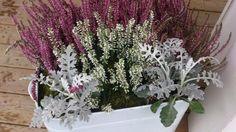 erika-heidekraut-herbst-deko-pink-weiss-silberblatt-zusammen Decoration, Floral Wreath, Photos, Wreaths, Plants, Home Decor, Pink, Gardening, Gardens