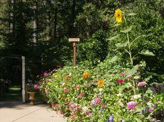 Chivas garden