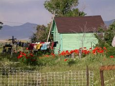 country clothesline...green barn...rusty roof too.....