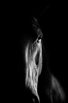 Low key photo of a horse | Shadow lighting photography | black and white photos