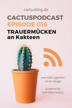 Sciara-Fliege – wachsen die wirklich nur in billiger Erde? Mythos und Wahrheit. Tipps vom Kaktusgärtner Ulrich Haage aus Erfurt. #haagelife #kakteenhaage #gärtnerei #kaktus #cactus #schädlinge #erfurt