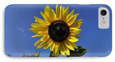 Sunflower IPhone 7 Case featuring the photograph The Shining Sunflower by Erika H