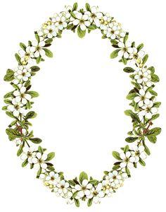 digital vintage flower frame png; transparent background; freebie