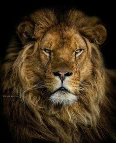 Top predator on nature