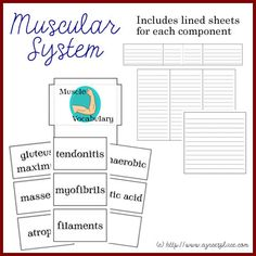 Lapbooks, videos etc on learning about the Muscular System
