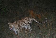South Africa, Kruger national parc