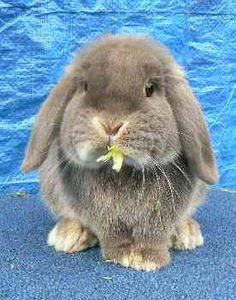 http://bunniez.hubpages.com/hub/Bunny-Care-Guide-How-To-Get-A-New-Pet-Bunny-To-Like-You