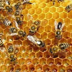 Beekeeping for Begin