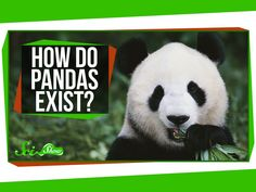How Do Pandas Exist? Mystery of History Volume 2, Lesson 31 #MOHII31