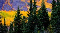 Inspiration that never ends, beautiful Yukon autumn. Canadian Artists, Autumn, Landscape, Photography, Painting, Inspiration, Beautiful, Biblical Inspiration, Scenery