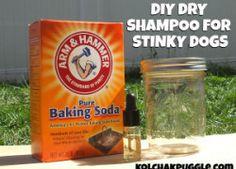 Got A Stinky Dog? This DIY Dry Dog Shampoo Can Help | Kol's NotesKol's Notes