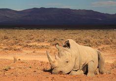 Horribly bleak study sees 'empty landscape' as large herbivores vanish at startling rate