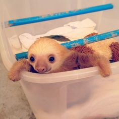 sloth in laundry basket...........Um this is pretty much called ugly cute. It's totally possible. He's like a weird creepy cute. lol