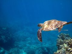 Turtle and Needlefish (by Lance Sagar)