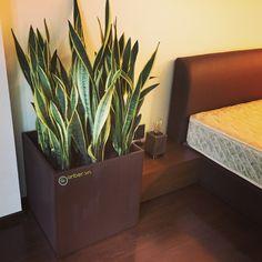 Trang trí nội thất phòng ngủ với chậu cây cao cấp anber1483 + cây lưỡi hổ.  --- Link đặt hàng mẫu chậu này: http://anber.vn/search?type=product&q=1483 Đặt nhanh: 0964 32 9799