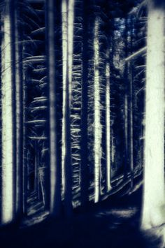high contrast fantasy forest Fantasy Forest, High Contrast, Abstract, Photography, Art, Summary, Art Background, Photograph, Fotografie